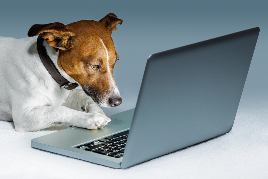 dog surfing the  internet with a computer